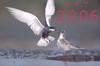 Oiseaux_couple_copie